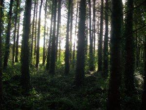 Woods near Blarney Castle, Ireland.