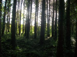 Woods near Blarney Castle, Ireland.